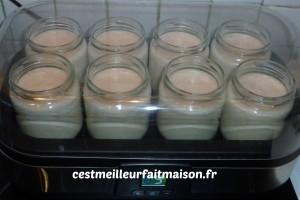 yaourts crémeux à la noisette